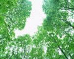 shiryoku5_T.jpg